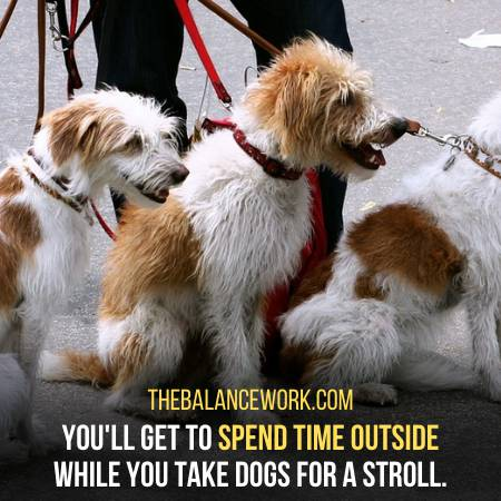Taking Dogs To A Stroll Can Be Good For Depression