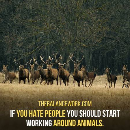 You Should Work Around Animals If You Hate People