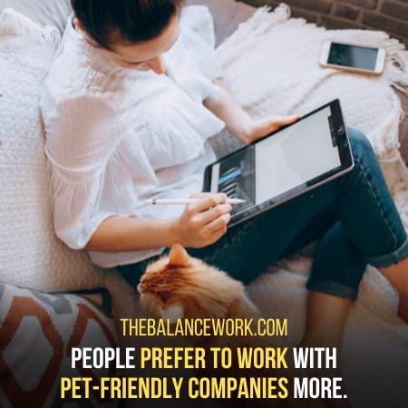Pets Boost The Repute Of Workplace