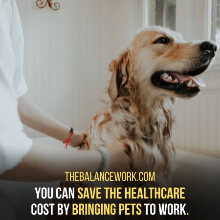You Can Save Money By Bringing Your Pet To Work