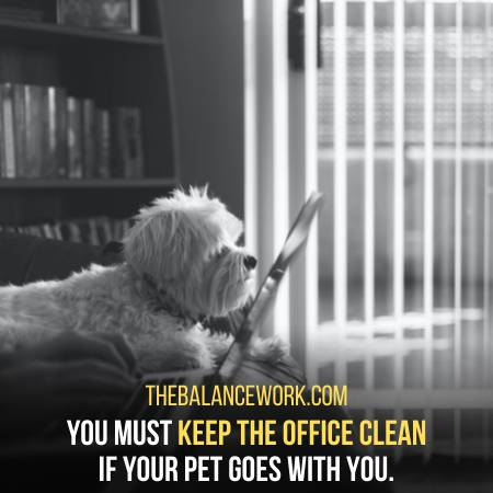 Keep Your Office Clean When Your Pet Is There