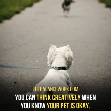 Pets Allow You To Think Creatively